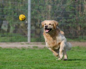 Verbesserung des Tierschutzes und Förderung  von Tierheimen in ganz Bayern